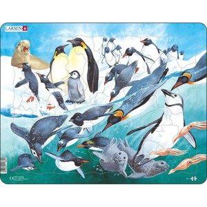 Larsen Puzzle Tučňáci, 50 dílků